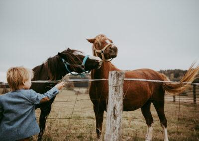 Svatba u koní